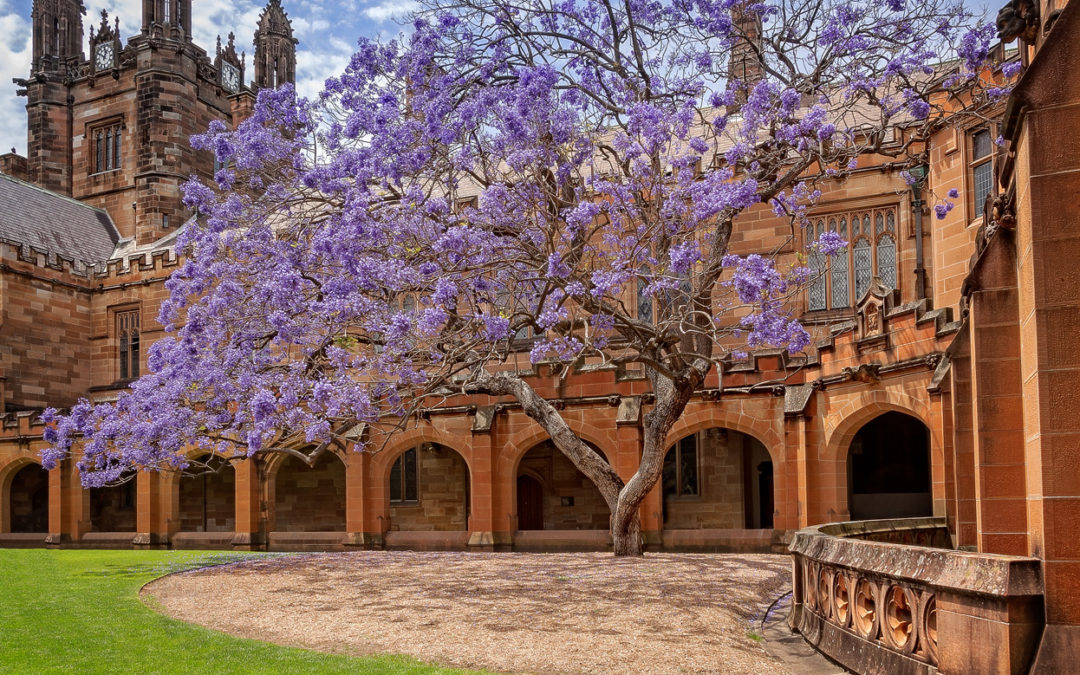 Looking for accommodation near the University of Sydney?